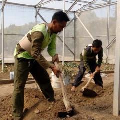 Petani yang memakai korset inovasi mahasiswa UISI