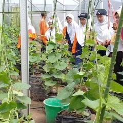 Semangat siswa SMP Muhammadiyah 12 Gresik mempelajari teknik bercocok tanam di green house UISI